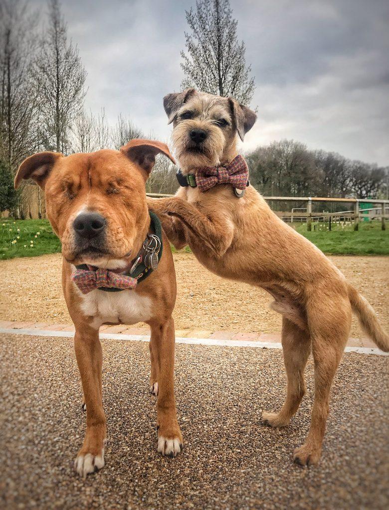 Умный пес стал отличным поводырем для своего слепого друга