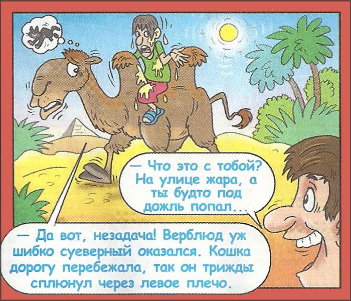 Анекдот про Вовочку и лес